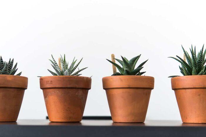 Terracotta Pots, Haworthia, Succulents, Plant Gifts, Melbourne, Pulp Kaktus