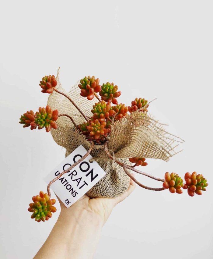 Sedum Rubrotinctum, Jelly Bean Plant, Melbourne Plant Gifts, Pulp Kaktus, Succulents, Cacti