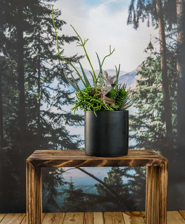 MIxed Succulent Planter, Plant Gifts, Pulp Kaktus
