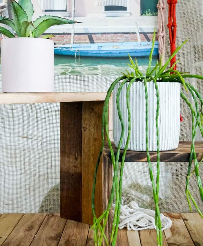 Rhipsalis, Jungle Cactus, Pulp Kaktus, Melbourne Plant Gifts