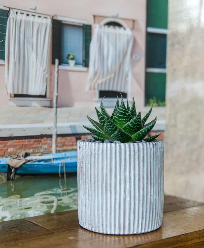 Gasworthia, Cement Planter, Zebra Plant, Matte Black Planter, Concrete Planter. Plants Gifts by Pulp Kaktus
