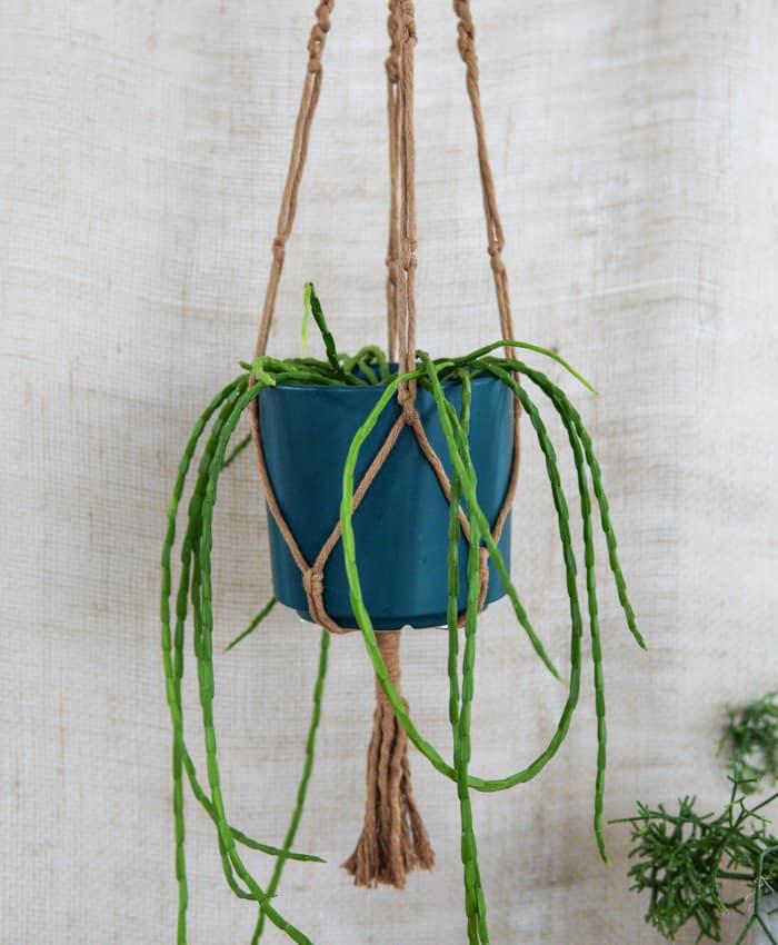 Macrame Plant Hangers, Rope Colours, Plant Hangers, Pulp Kaktus, Taupe