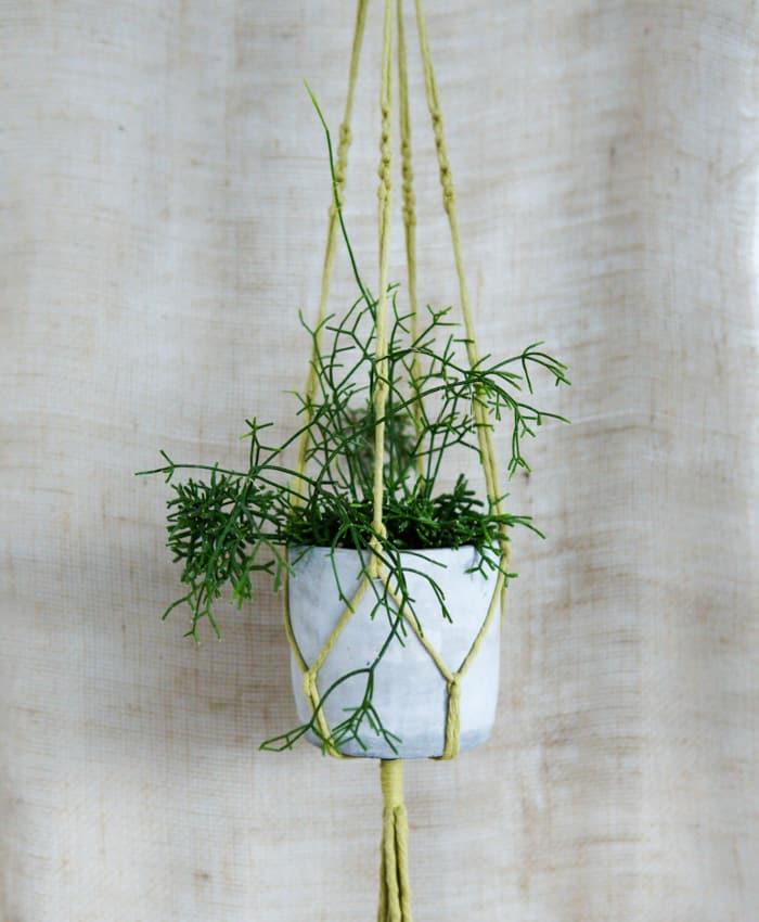 Macrame Plant Hangers, Rope Colours, Plant Hangers, Pulp Kaktus, Pistachio