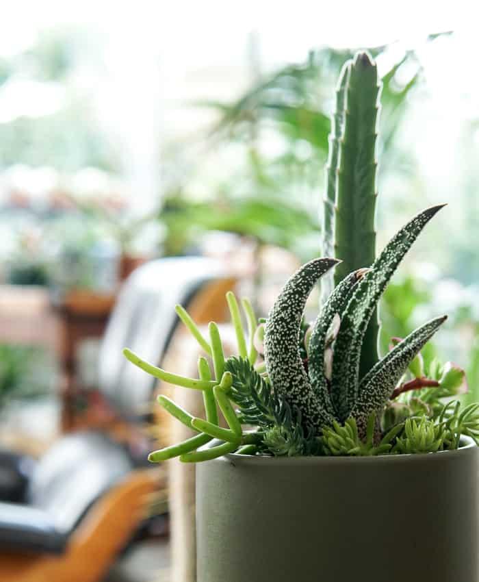 MIxed Succulent, Moss Green Planter, Succulent Bouquet, Plant Gifts Melbourne, Pulp Kaktus