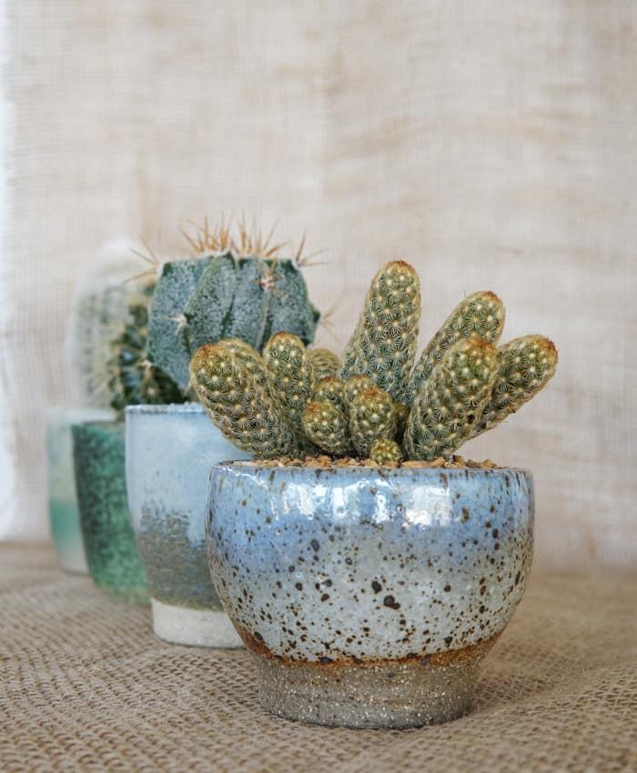 PK Handmade Ceramics, Handmade Ceramics, Planter, Cacti Planter, Unique Gifts